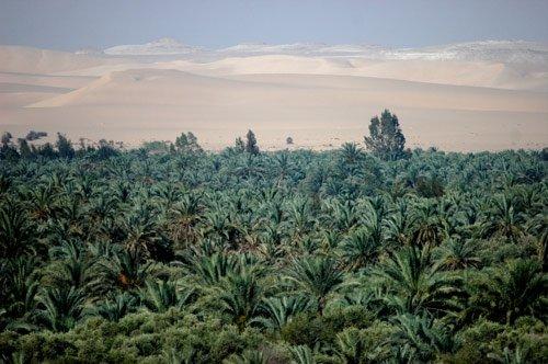Gardens in Siwa Oasis