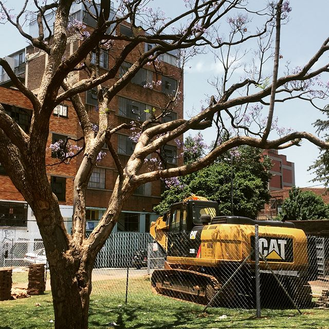 Sometimes you wish and hope and work for something for a very long time... then one day it's there!!! 😍  We always knew it would be a special day when we saw a yellow cat 🐱❌🚜✅ in Jeppe Park. Here she sits in the shade of a beautiful Jacaranda, with our building '35 Jules' in the background. 35 Jules was forcefully hijacked recently - fortunately for less than a day thanks to the incredible work of COJ public servants and the Hawks... we all wasted a lot of time and focused on surviving instead of growing for a while... but justice prevailed in the end and the view of the construction site for the long-awaited Jeppe Park upgrade is a symbol of better, brighter things ahead!  Thanks Johannesburg City Parks and Zoos and JDA for seeing what an incredible public asset Jeppe Park is and investing in it!  Our goal for a long time has been to see the 🚜 in the park.  Now it's there, our new goal is to have swing in the new playground! Can't wait!!!