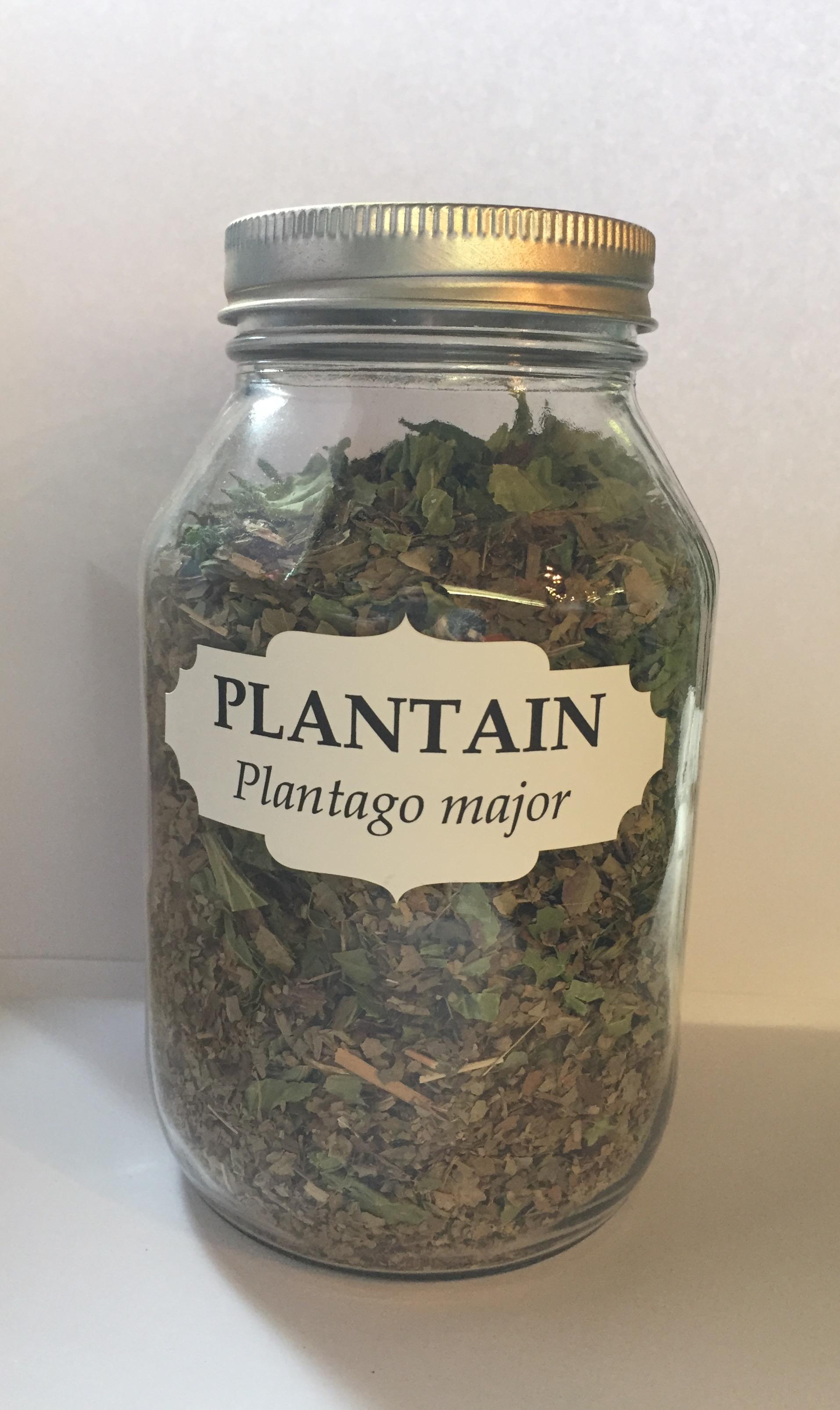 plantain wc.jpg
