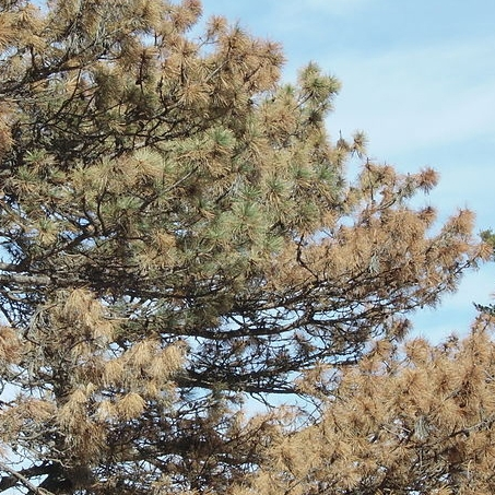 Tree and Plant Diseases