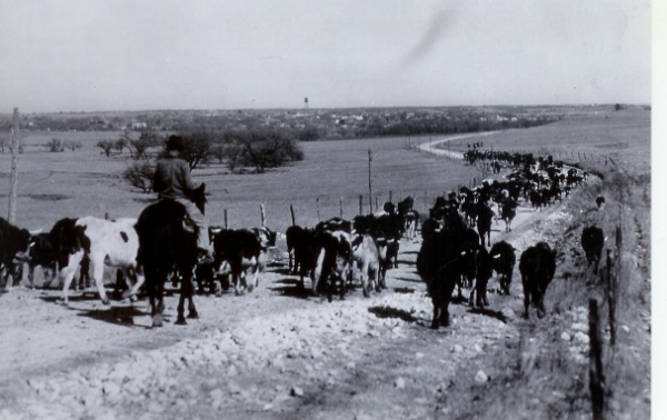 Cattle drive coming into Saint Jo.  Notice the water tower in the background.