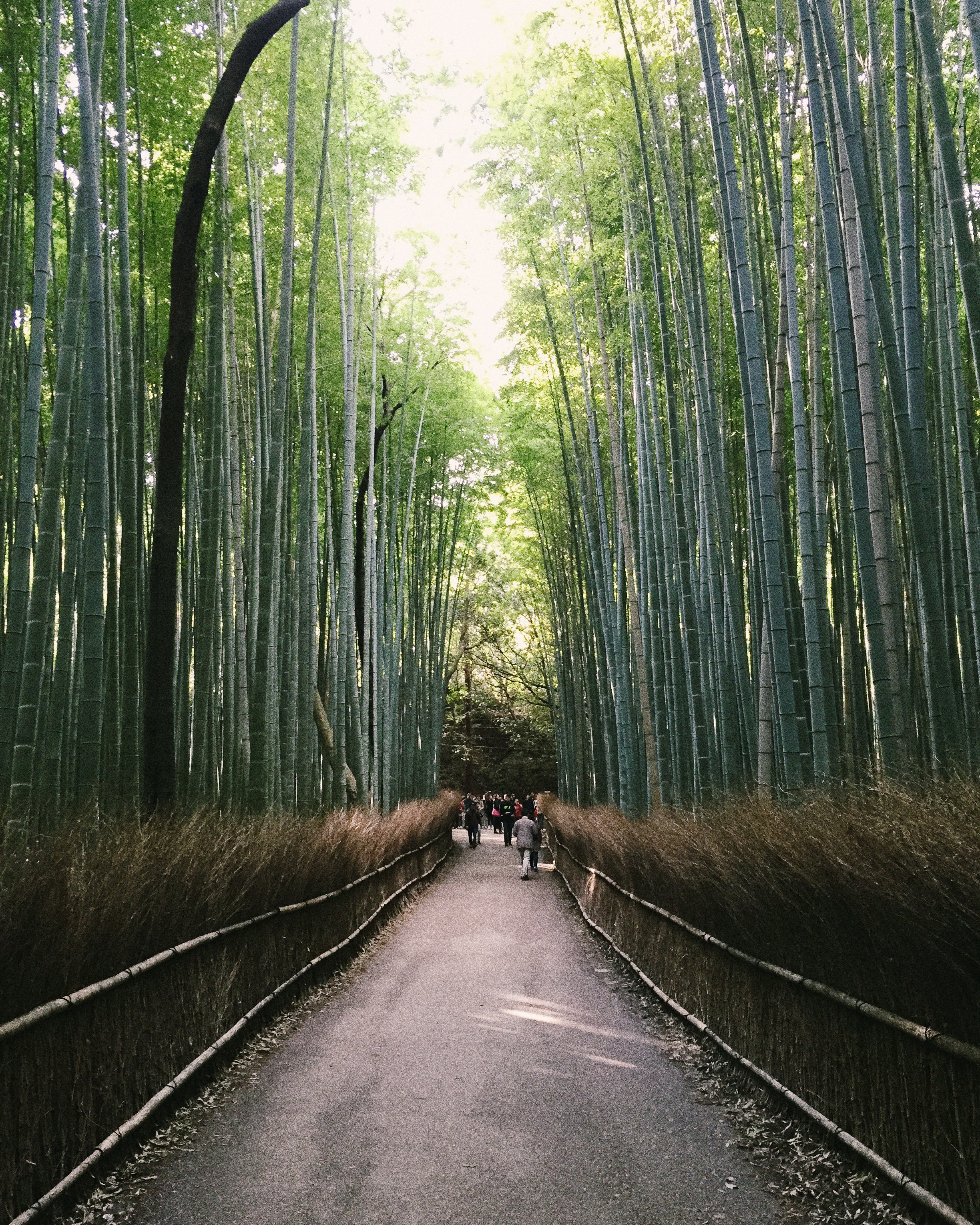 Arashiyama, Autumn 2014.