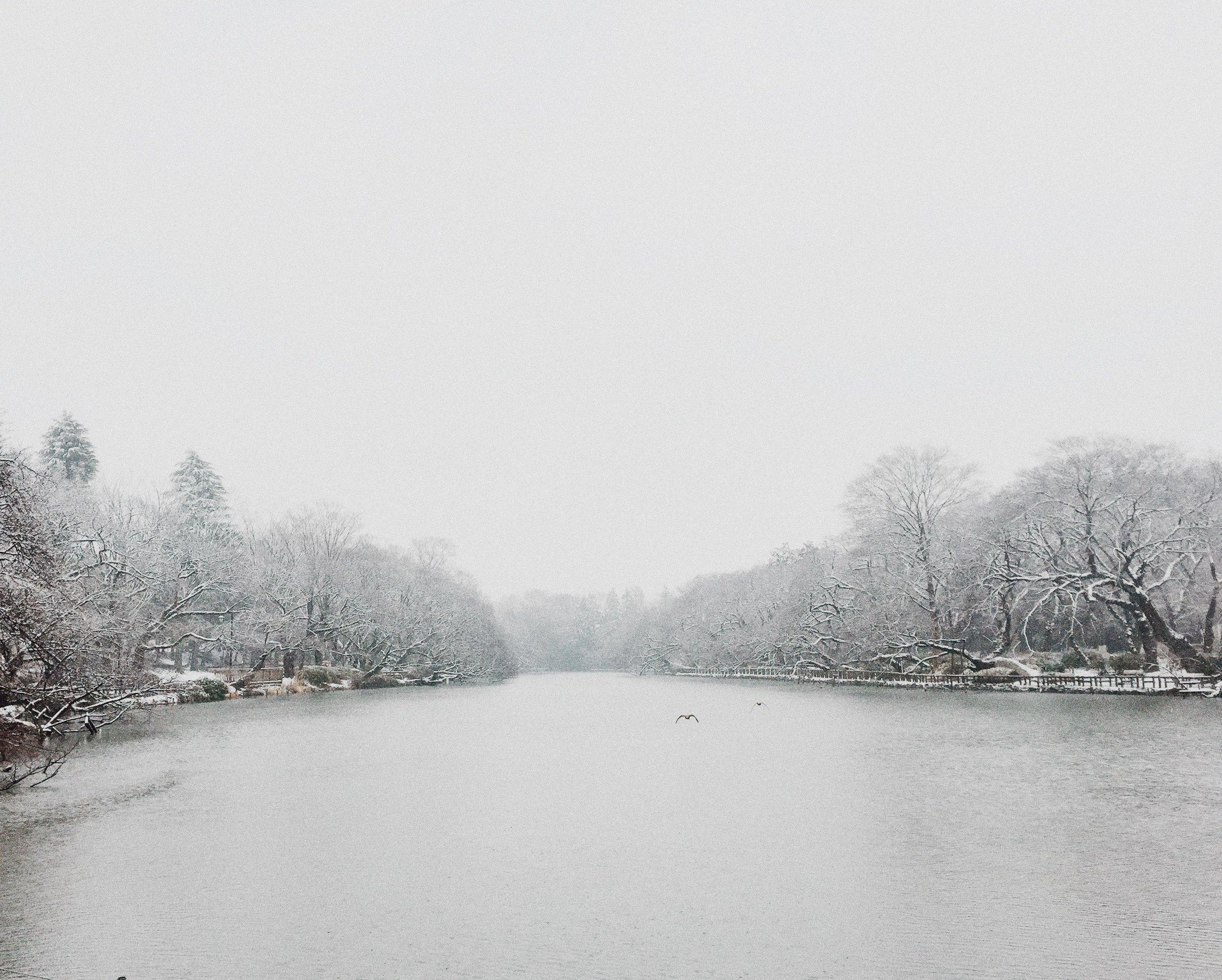 Inokashira Park, Winter 2015.