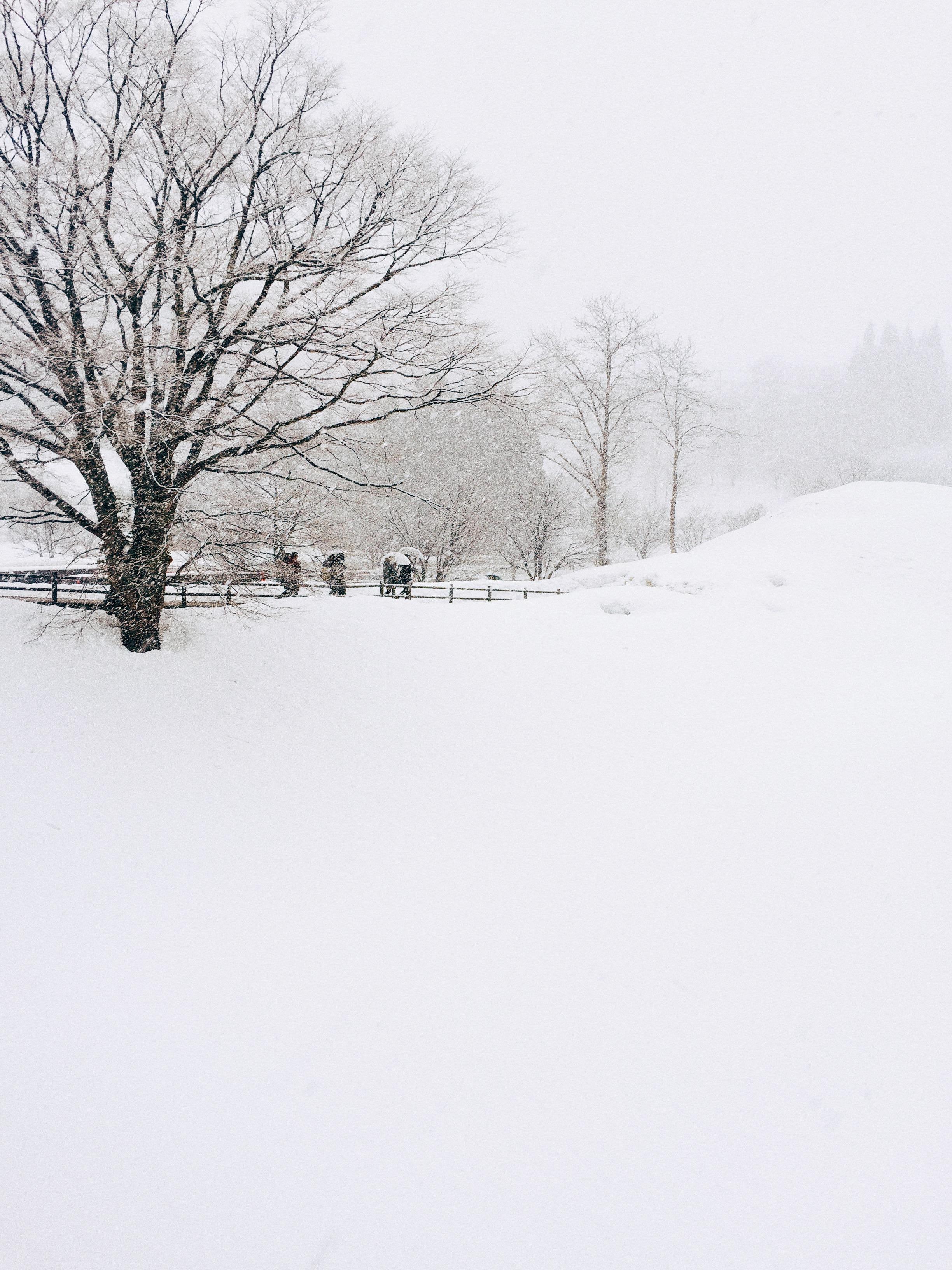 Shirakawa-go, Winter 2015.