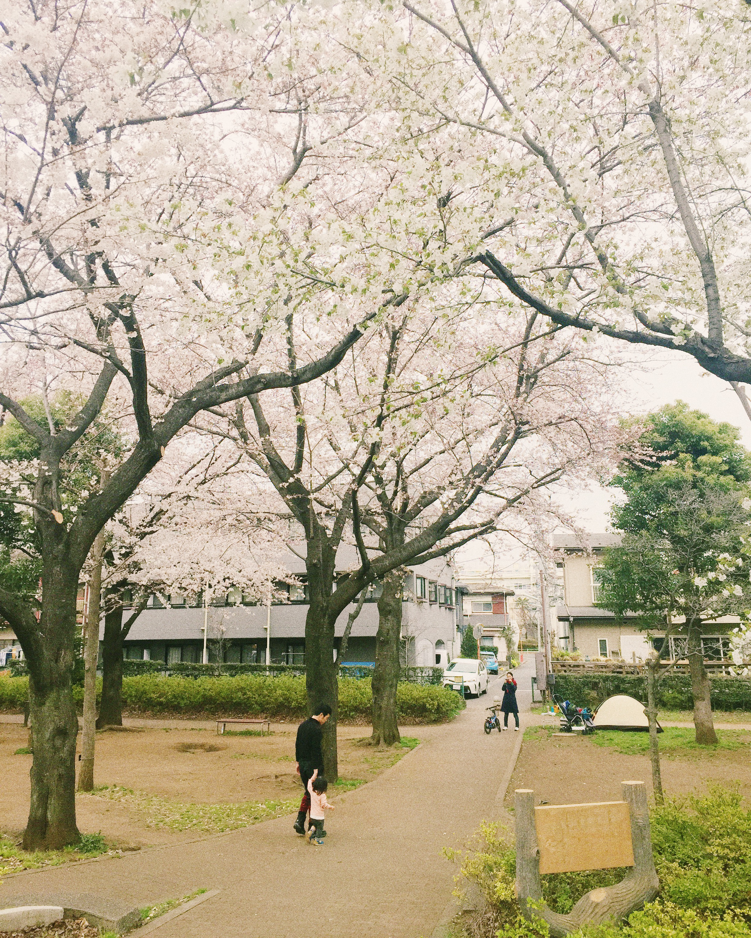 Shinkawa-dori, Spring 2015.