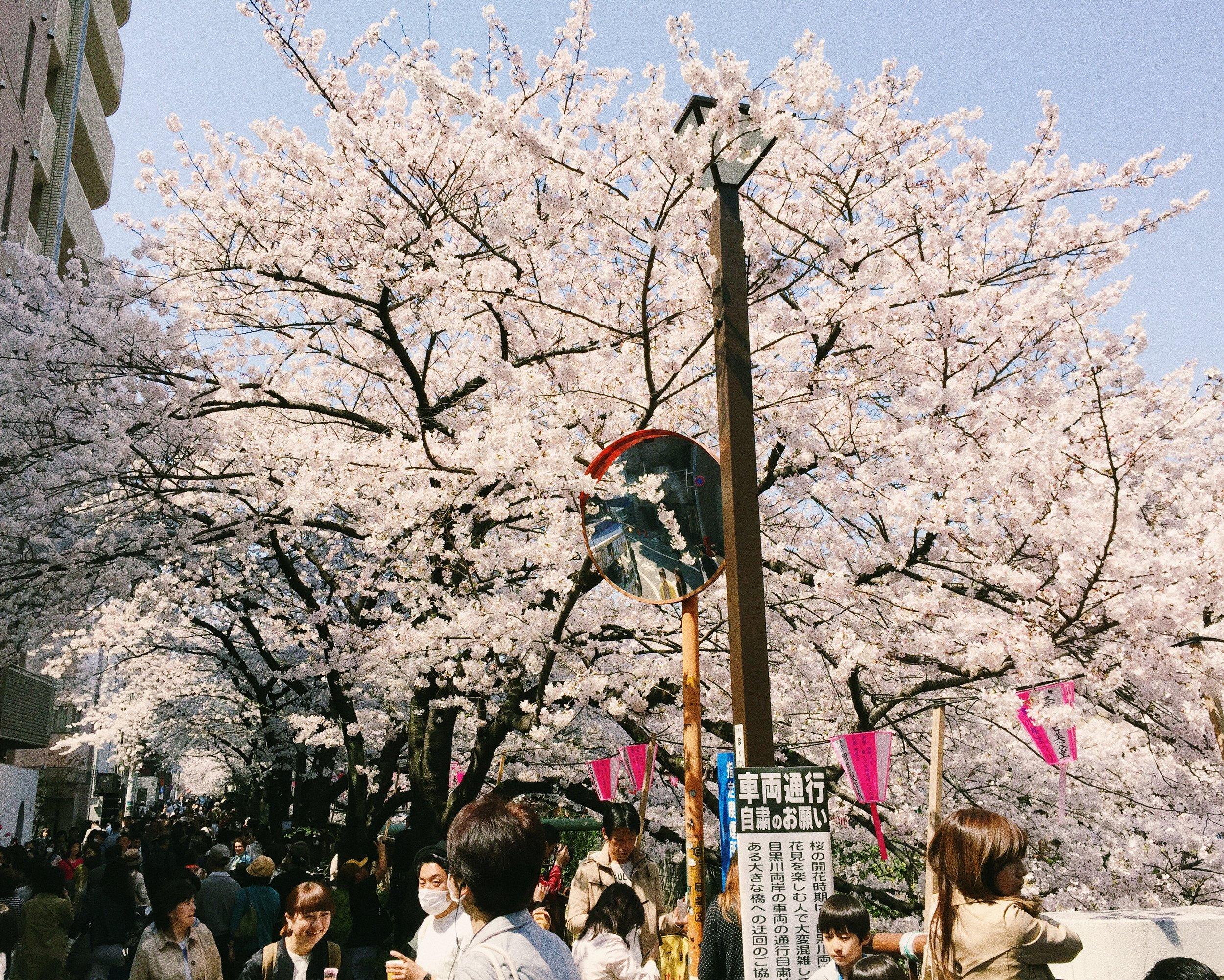 Nakameguro, Spring 2015.