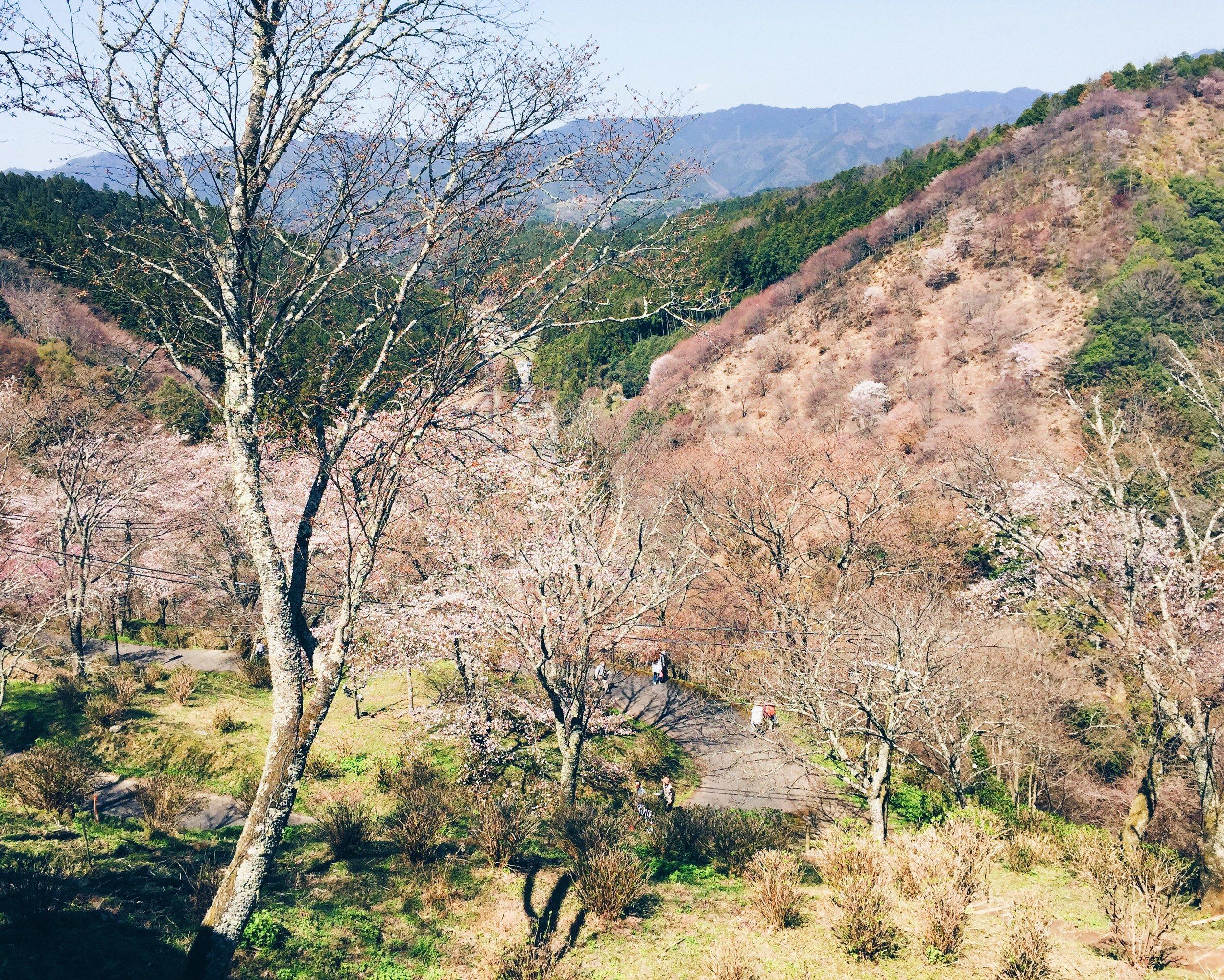 Mount Yoshino, Spring 2015.