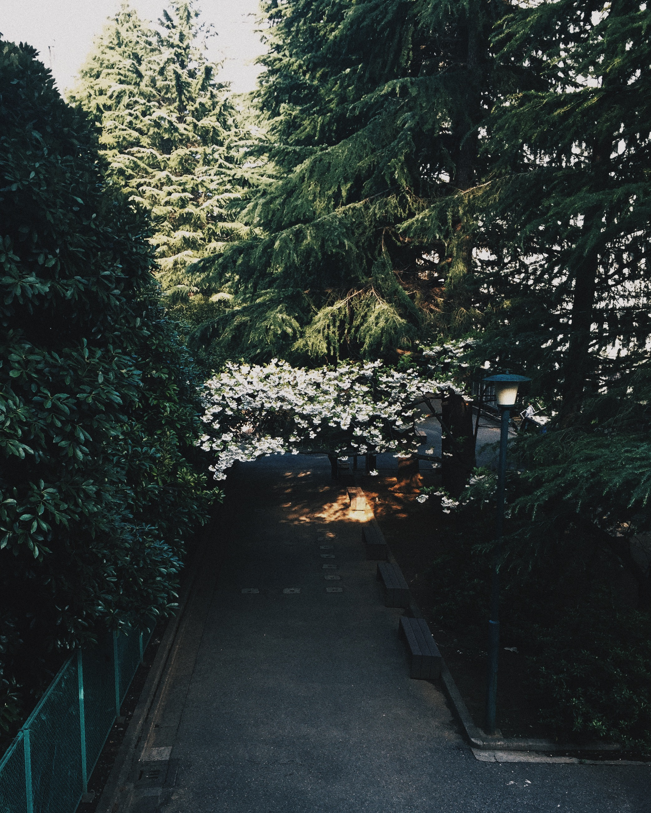 Waseda University, Spring 2015.