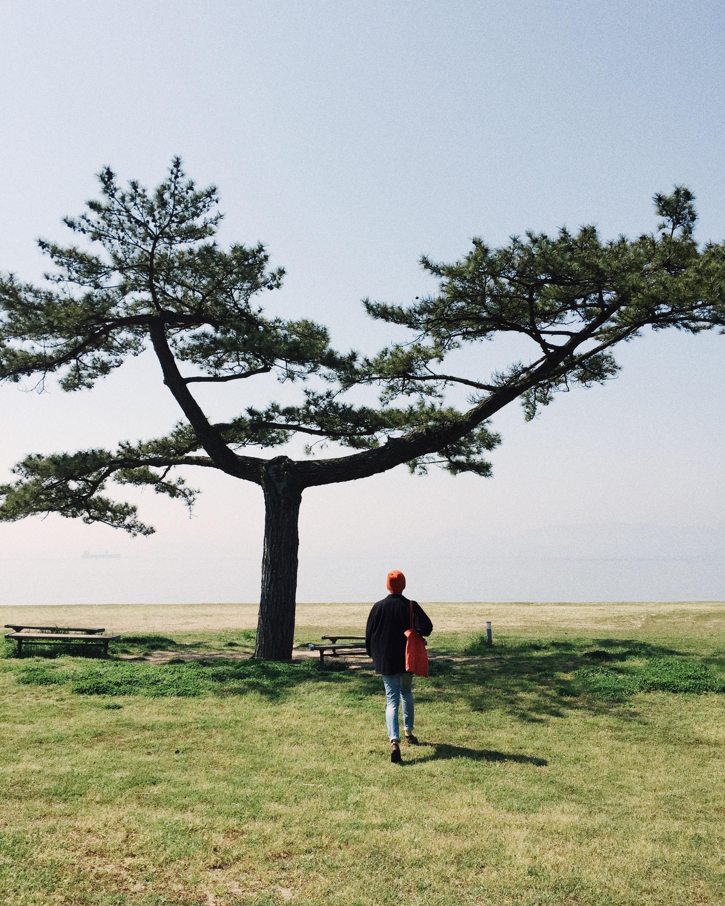 Me. Naoshima, 2015.