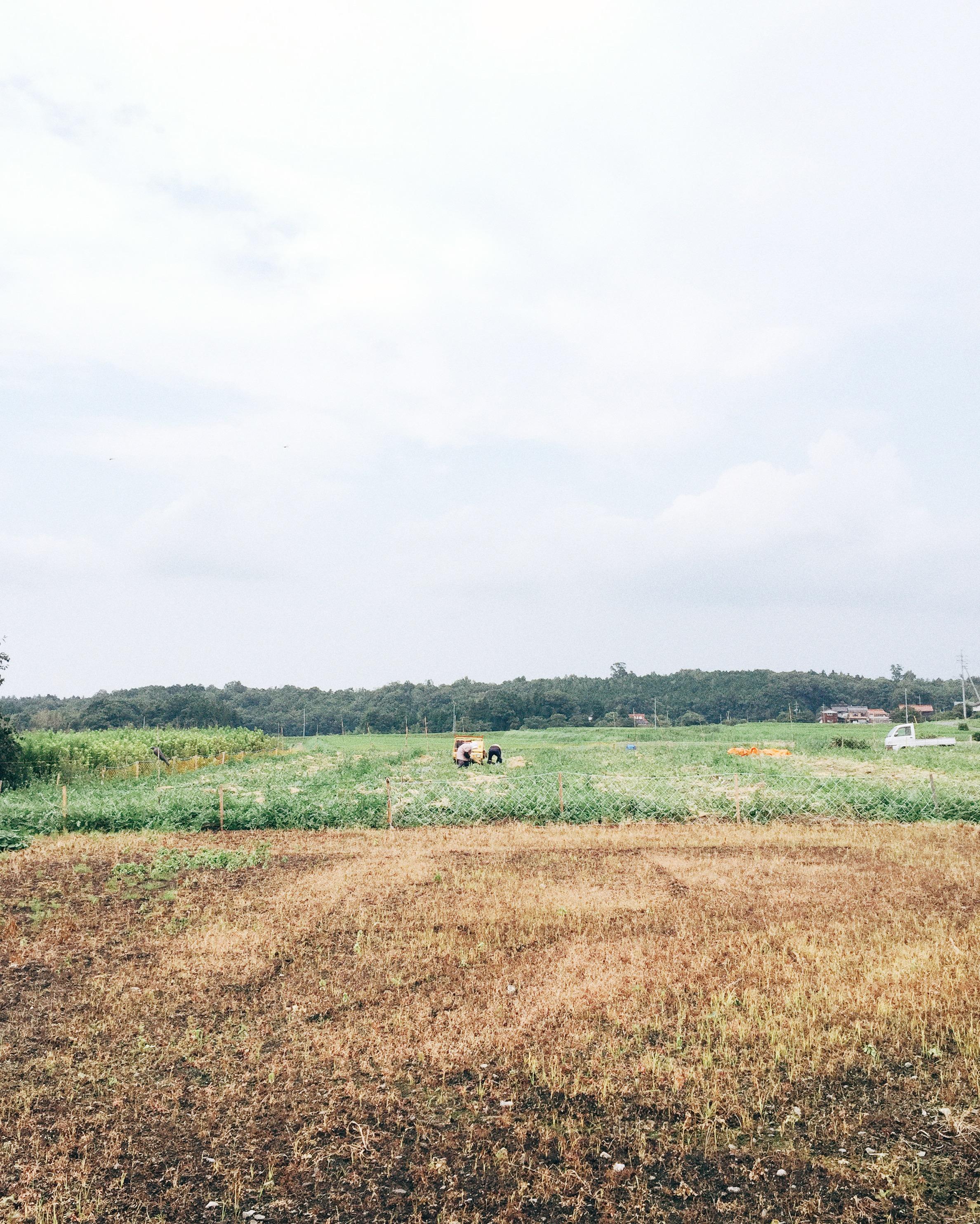 Somewhere in Yonago, Summer 2015.