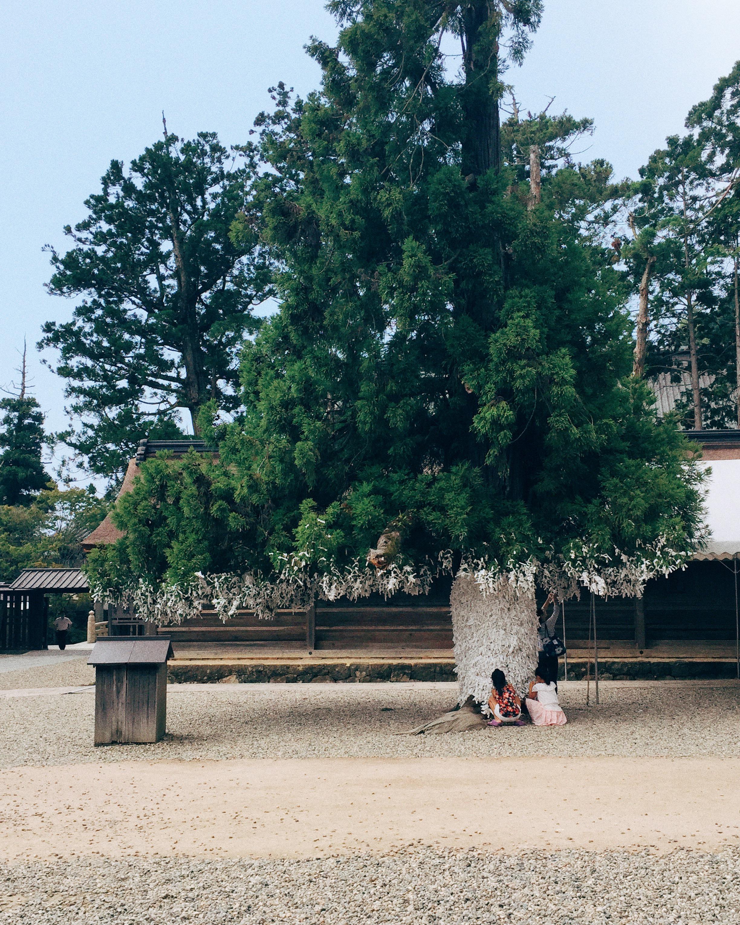 Taisha Grand Shrine, Summer 2015.