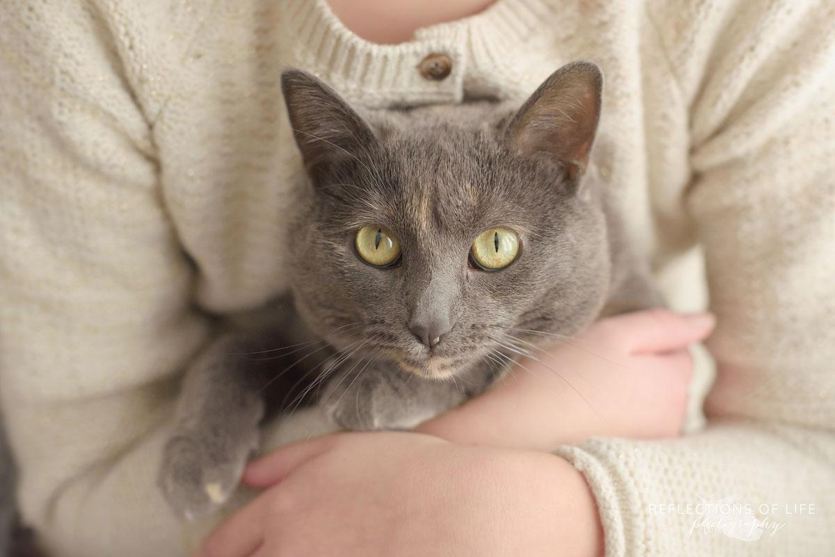 Gray Cat in Children's Arms Niagara Ontario