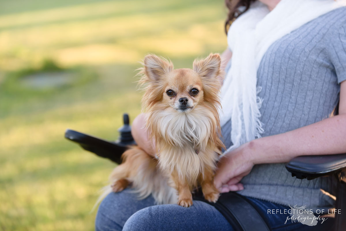 007 Professional Toronto Family Photos Cute little Dog