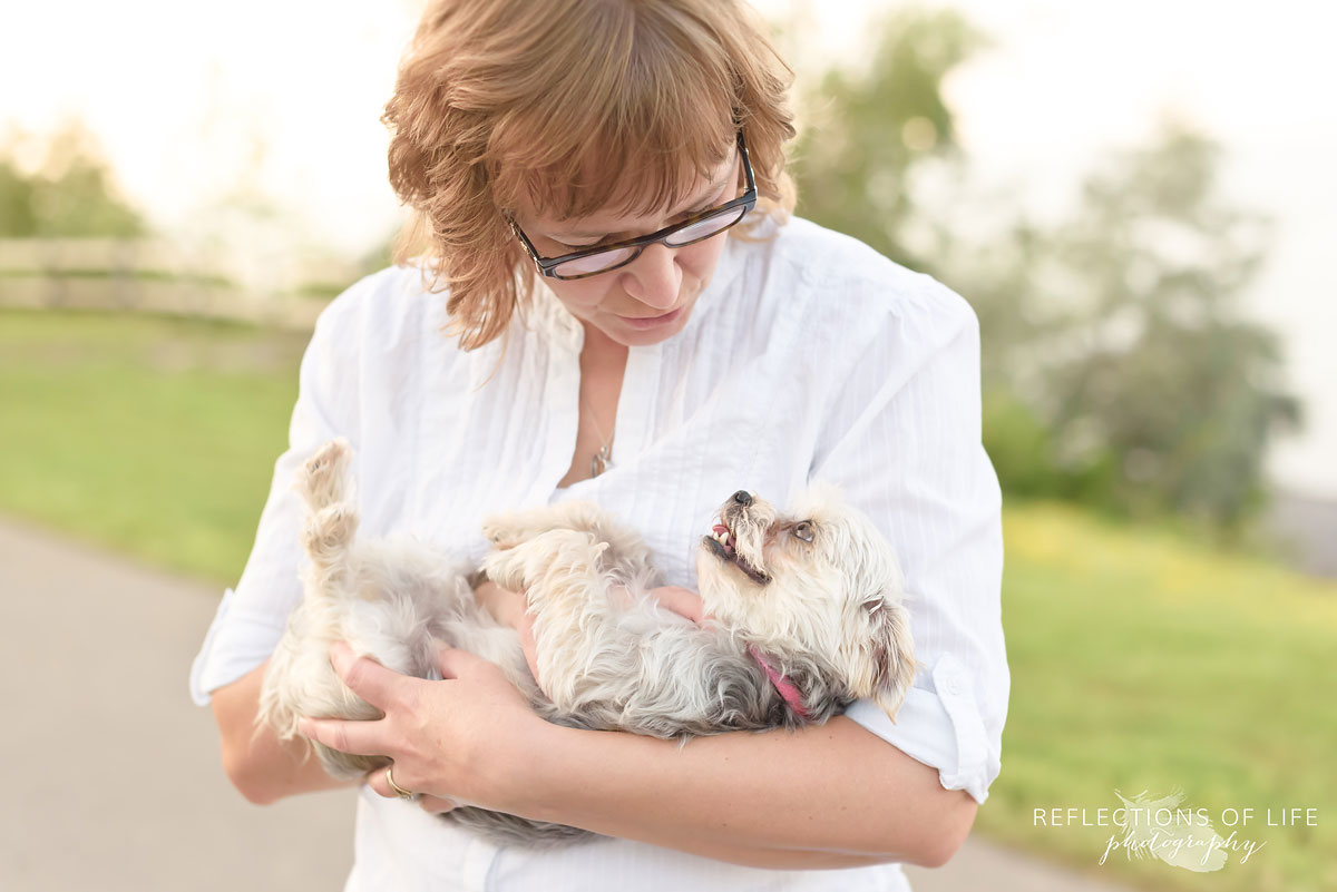 Morkie Pet Photography Grimsby Ontario