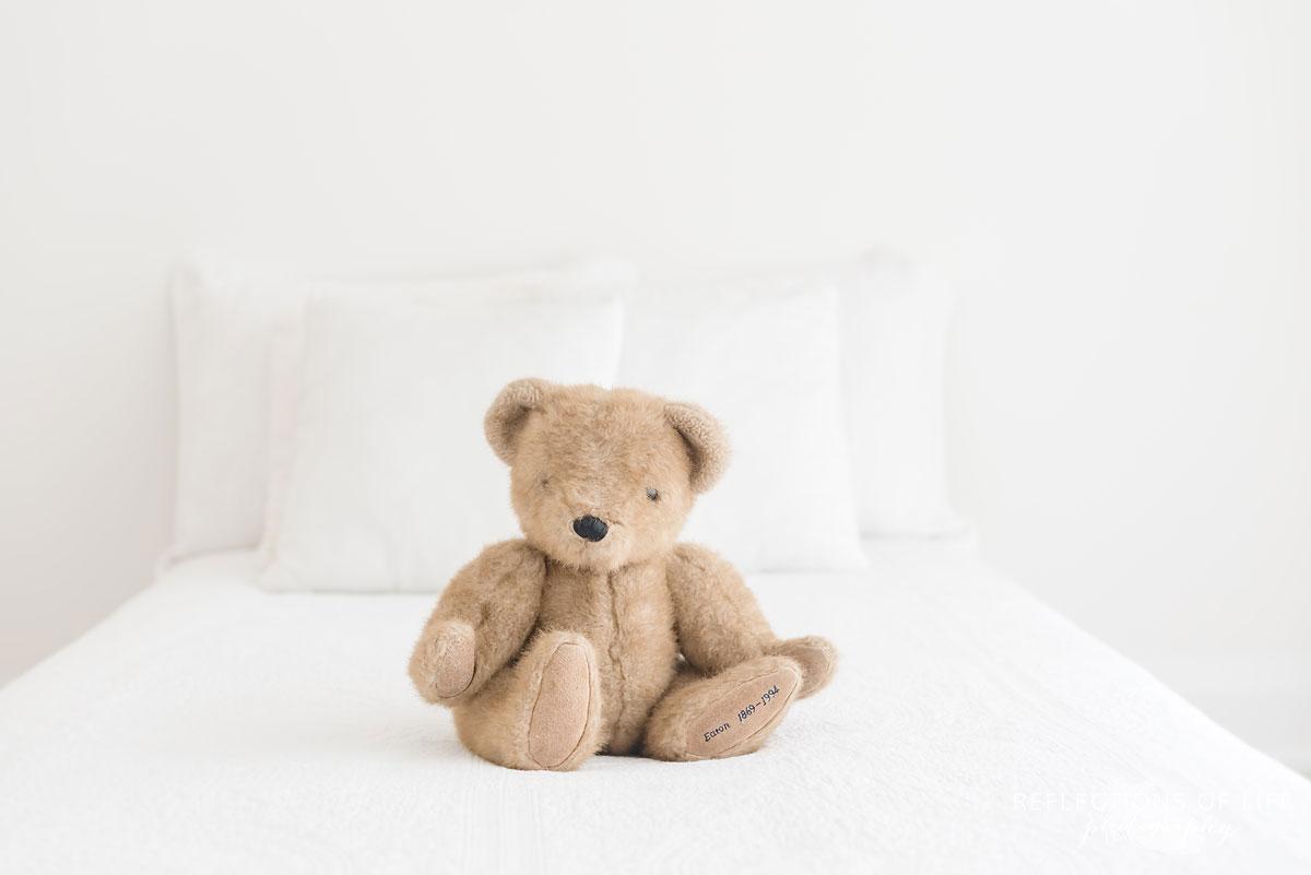 teddy bear white studio