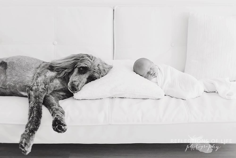 family dog and baby share a pillow on the couch in black and white