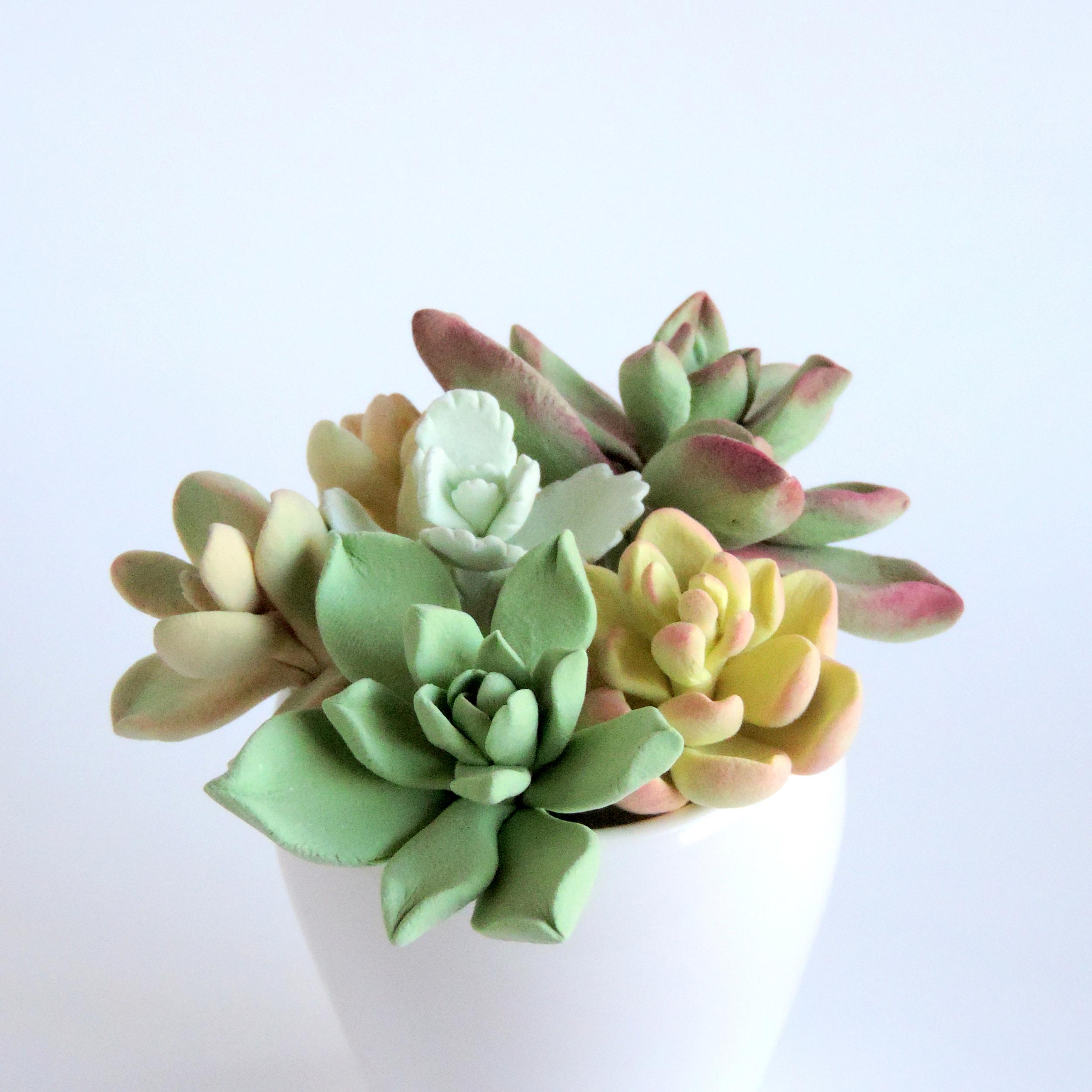 Succulent_01.jpg