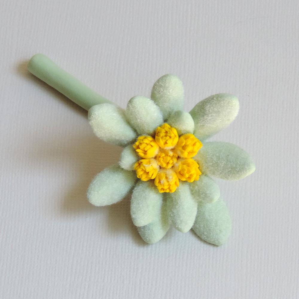 edelweiss_01.jpg