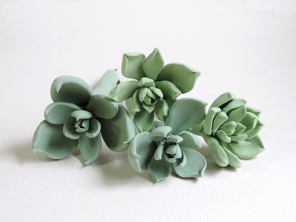 succulent_04.jpg
