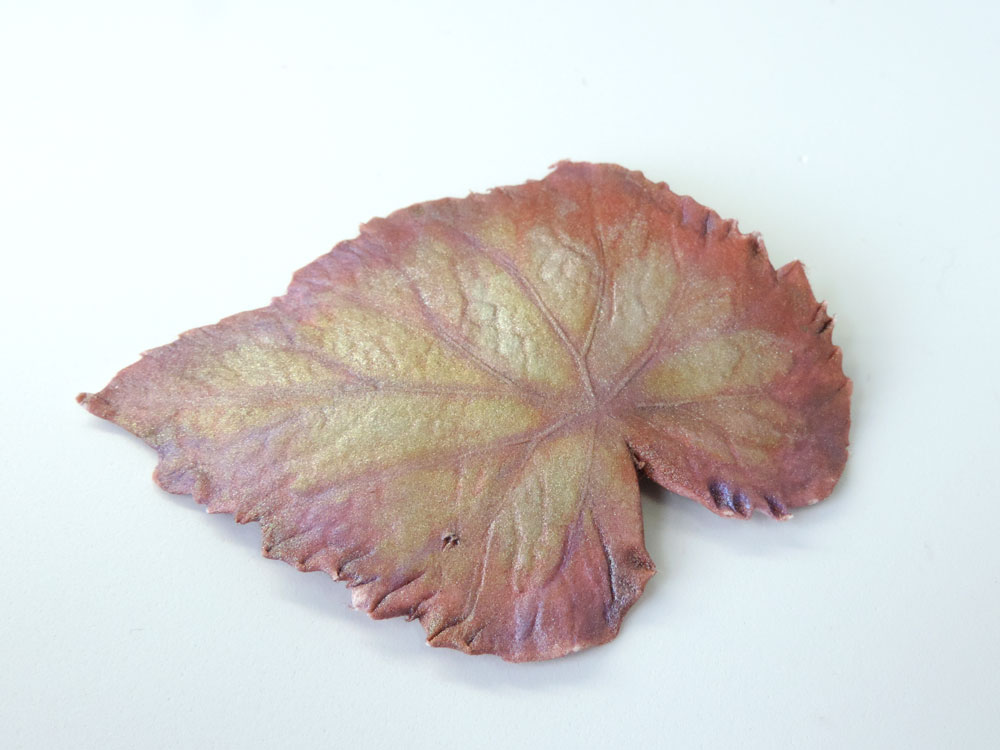 Rex begonia
