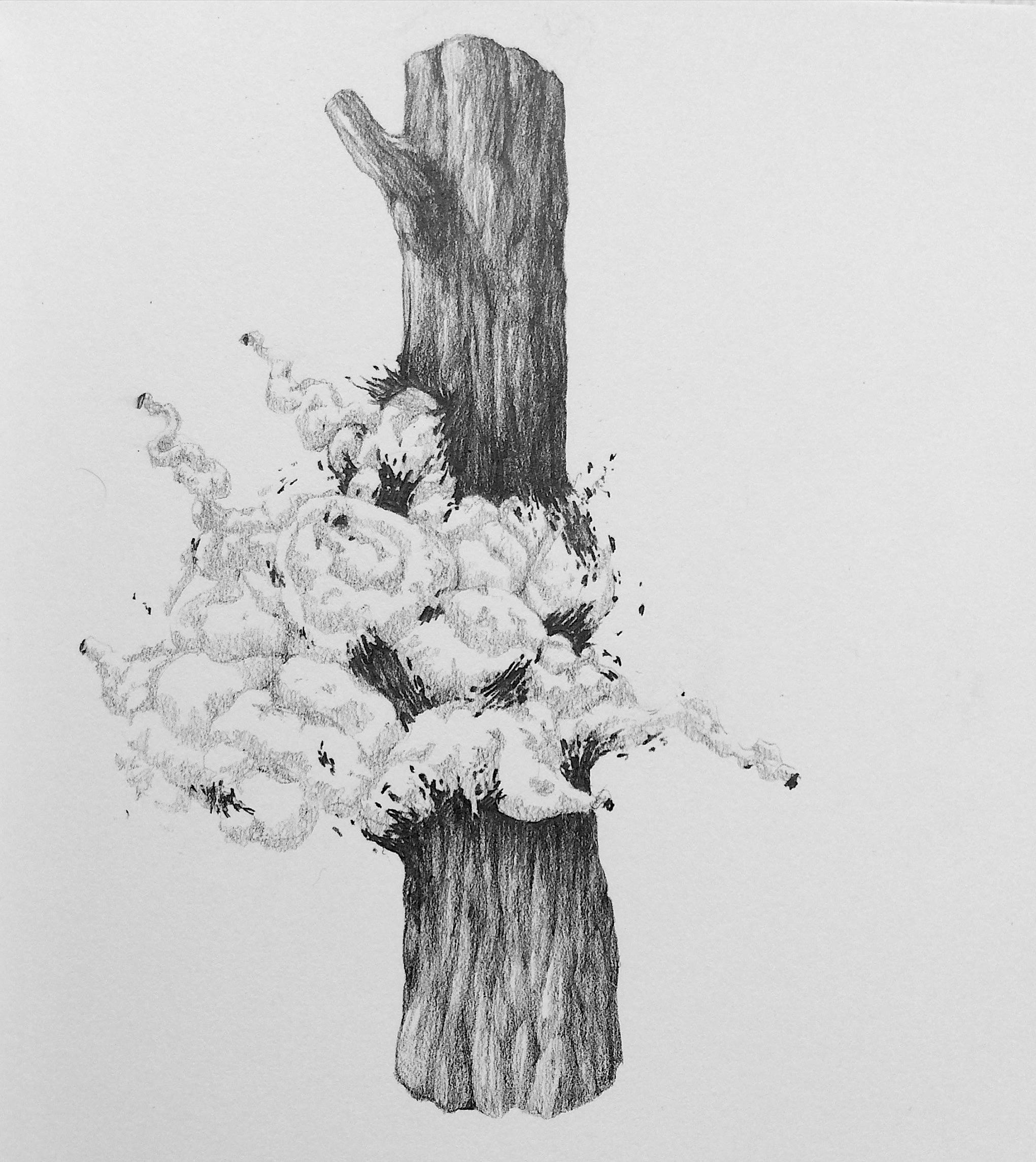 A5, graphite