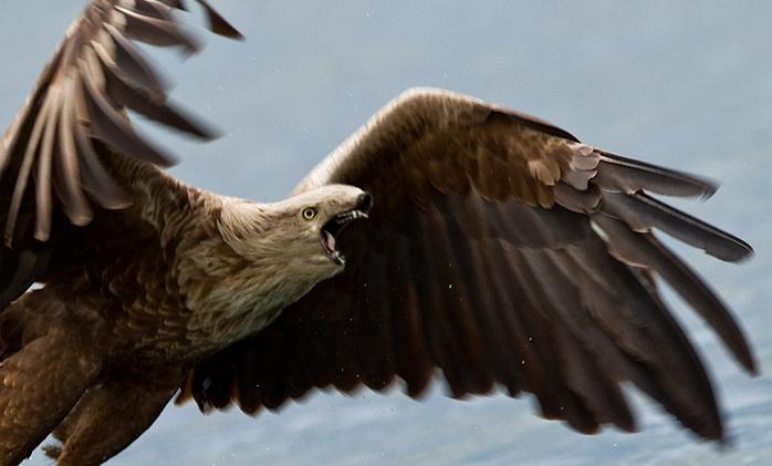 eagle lol.jpg