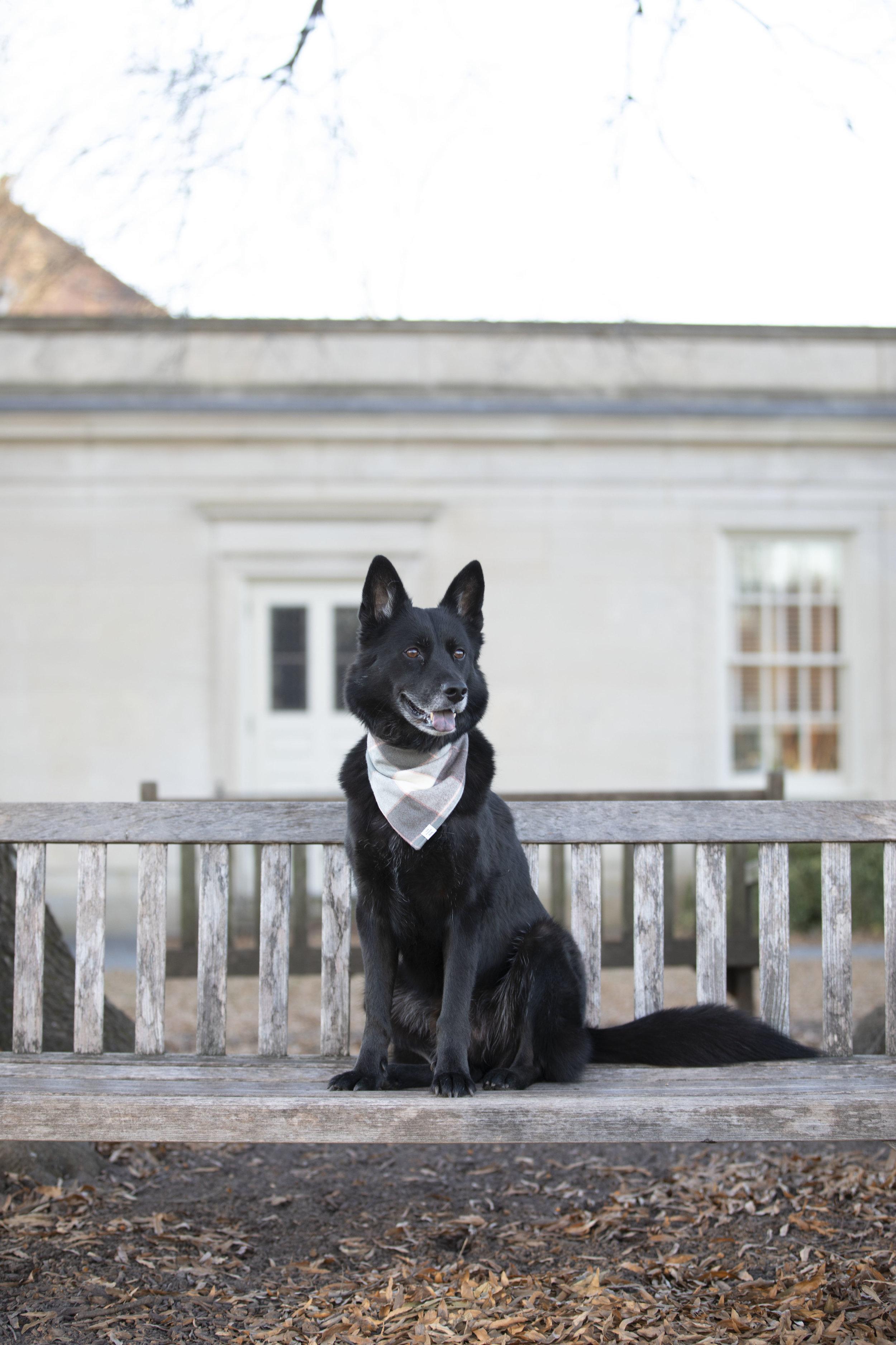 Navarre Foggy Dog 2048-0640.jpg
