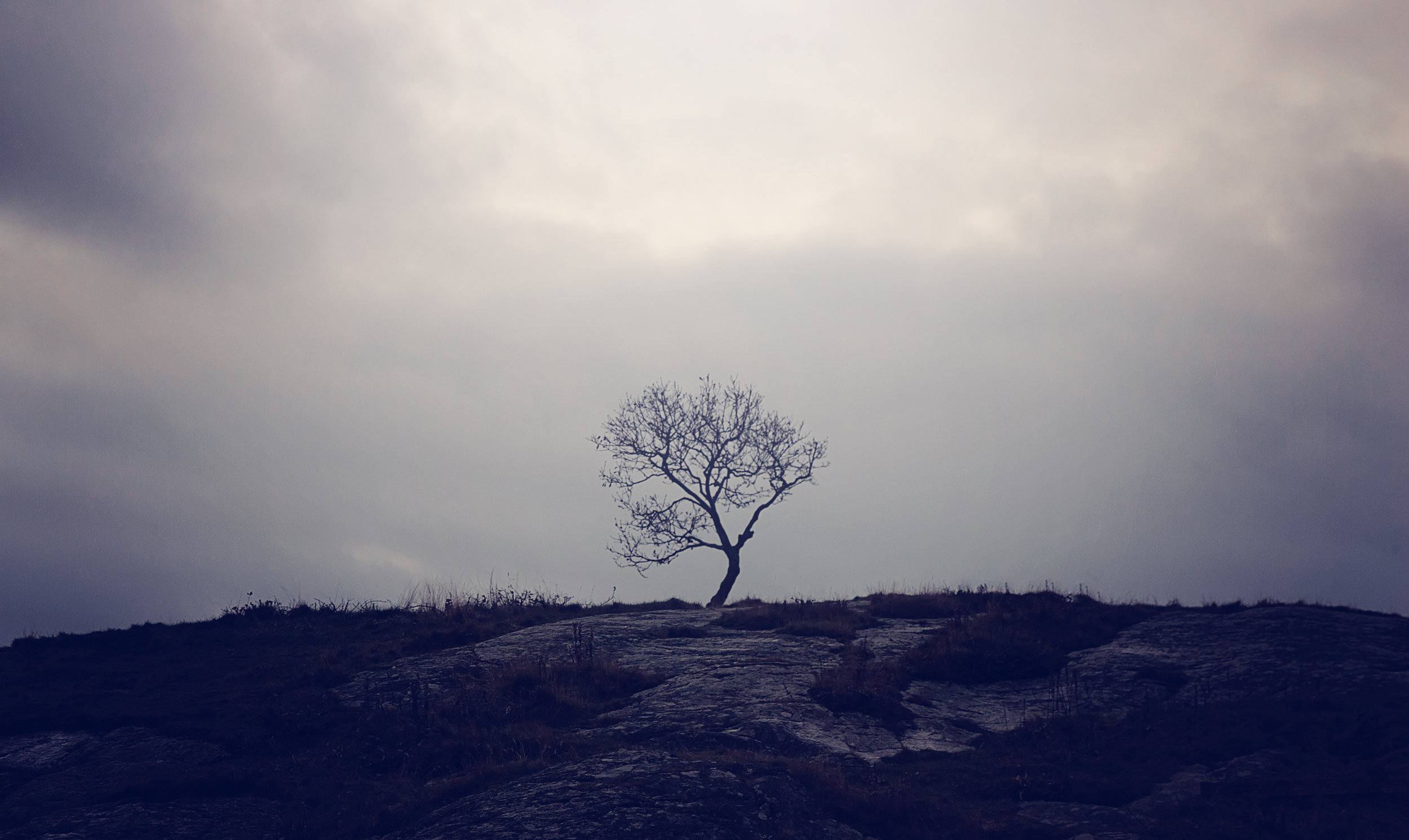 Branno Lonely Tree 0686.jpg
