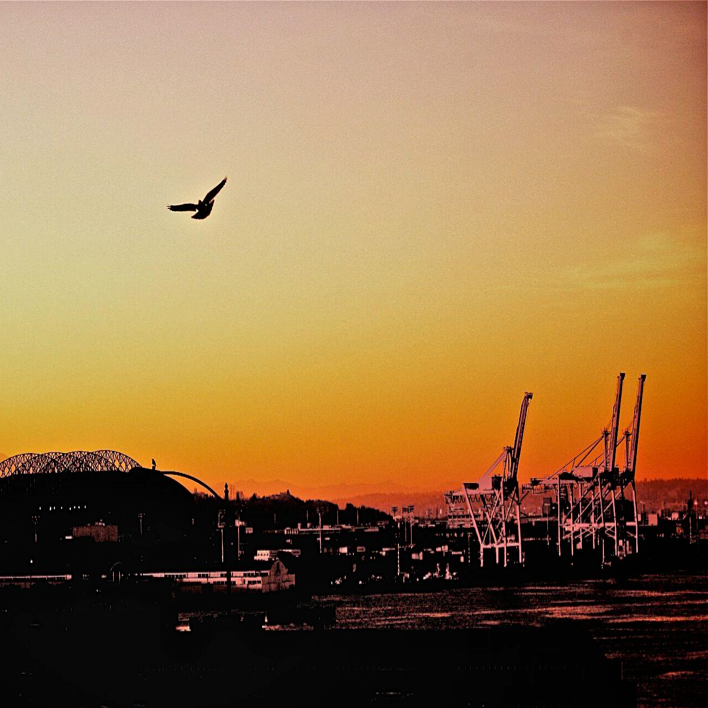 Seattle Port Mountain Bird Skyline Dusk.png