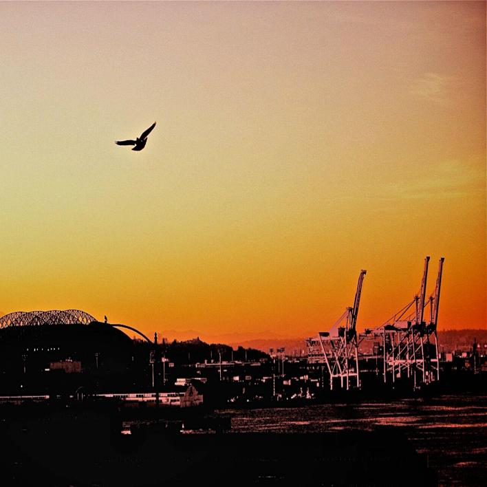 Seattle Port Mountain Bird Skyline Dusk.png