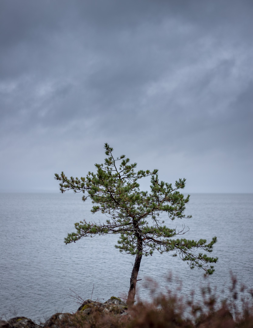 Canon 6D, Canon EF 50mm f1.8 -> 1/160 sek, f2,5, ISO 100, 50mm
