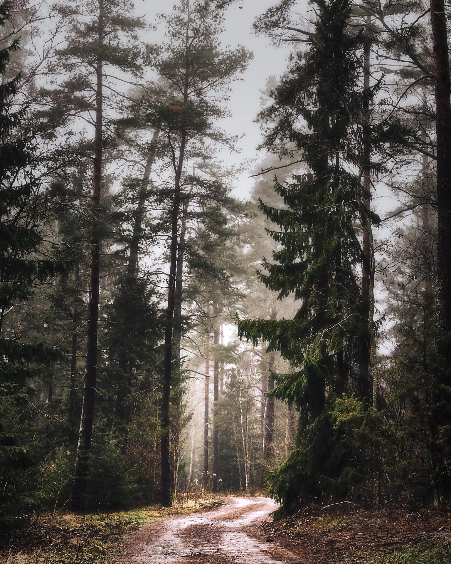 December i Sverige