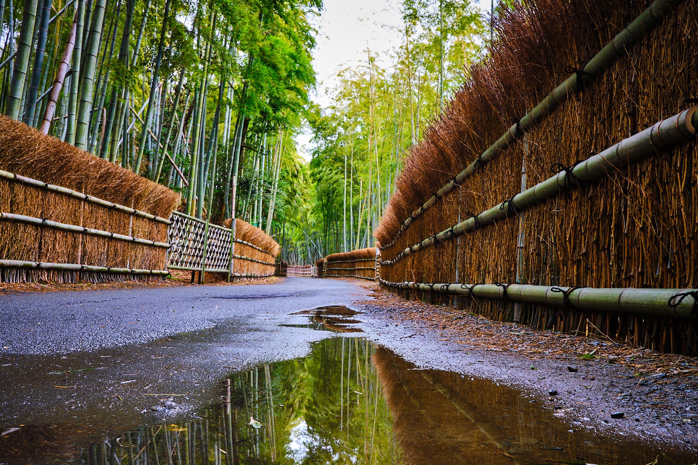 Kyotoshi Rakusaichikurin Park