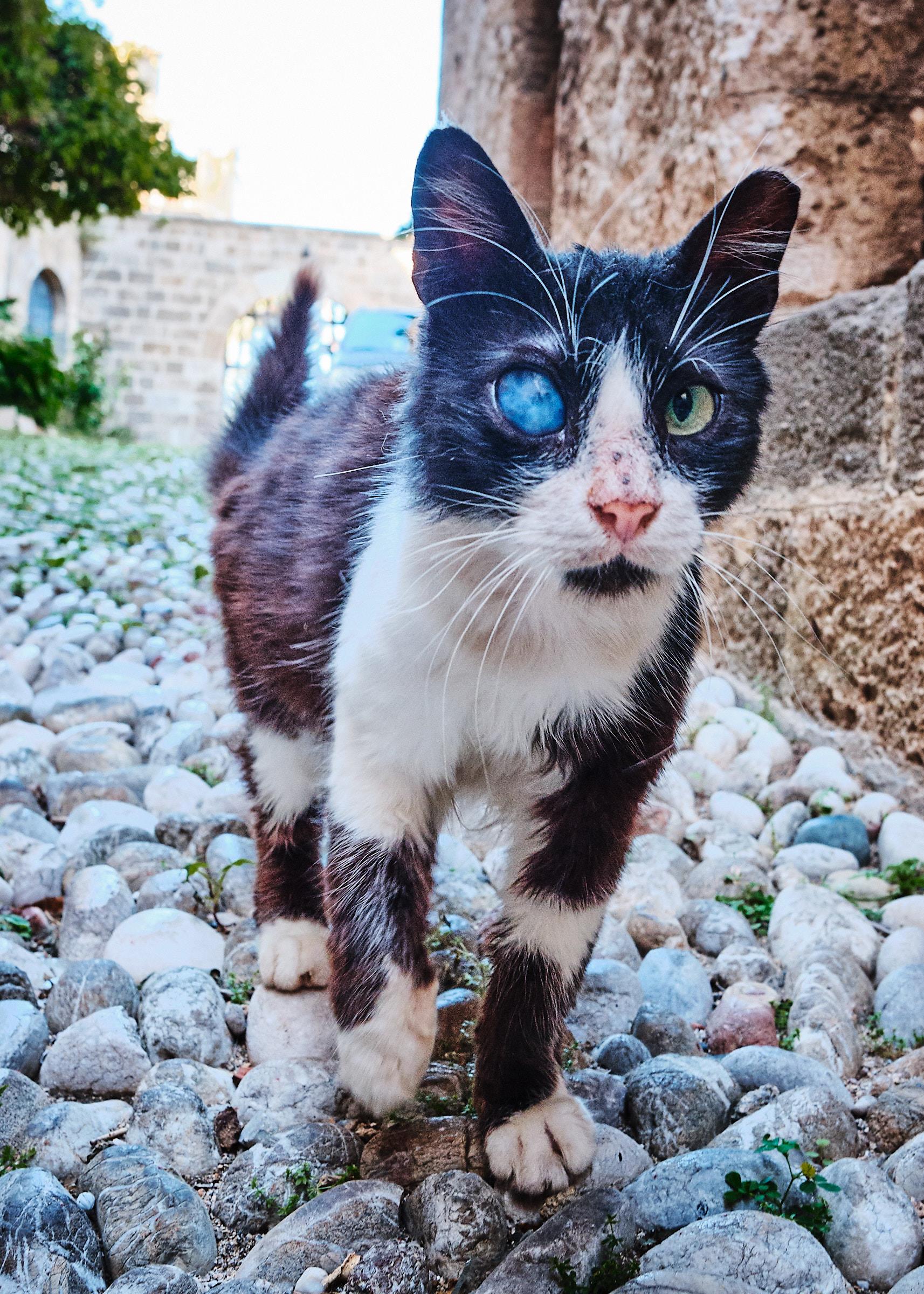 Många hemlösa katter finns det på Rodos