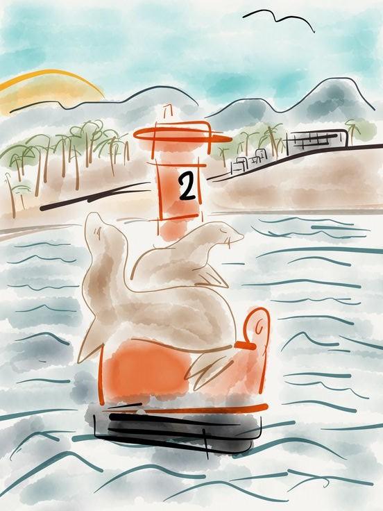 Sun Bathing on Buoy