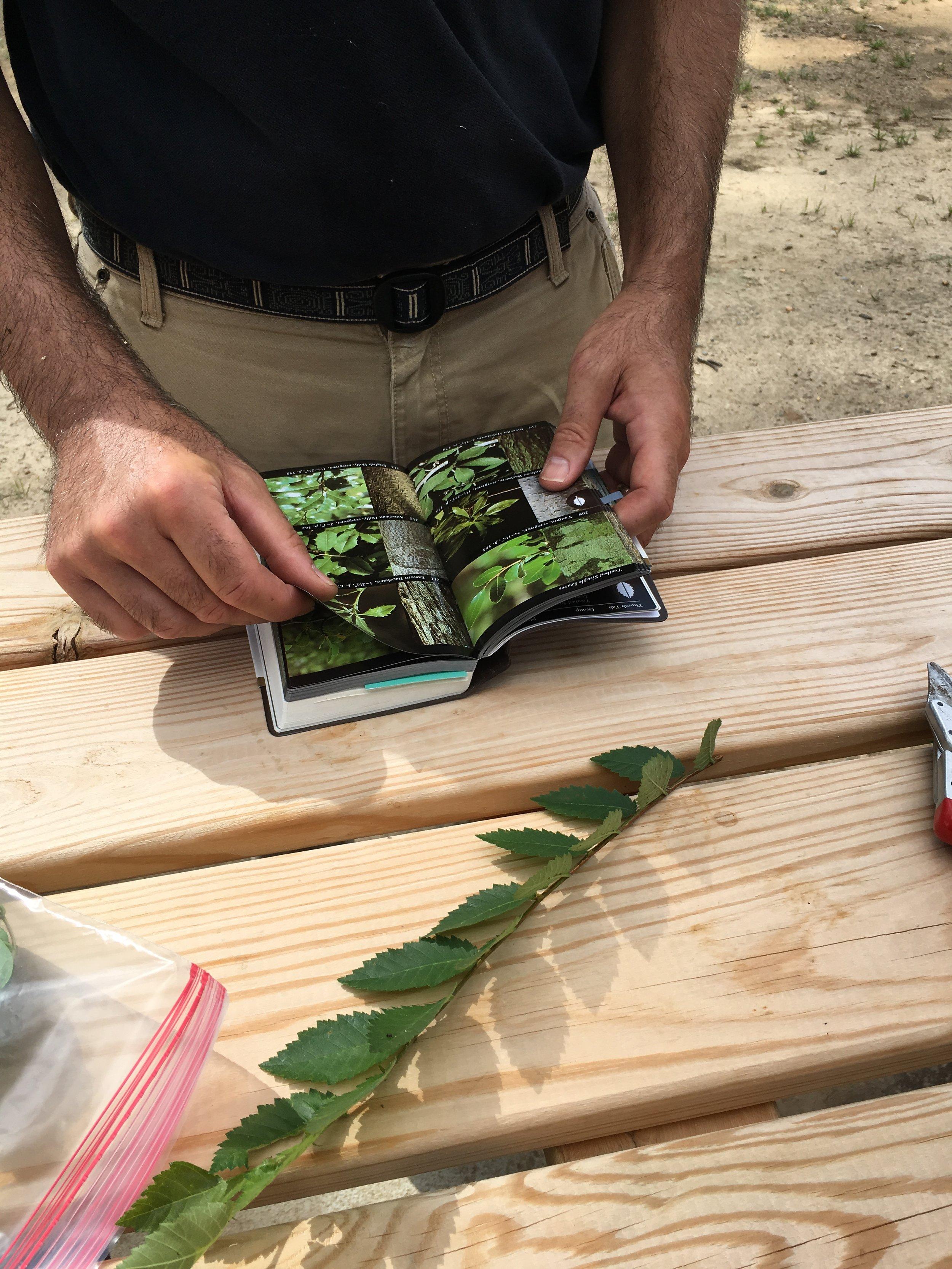 identifying leaves