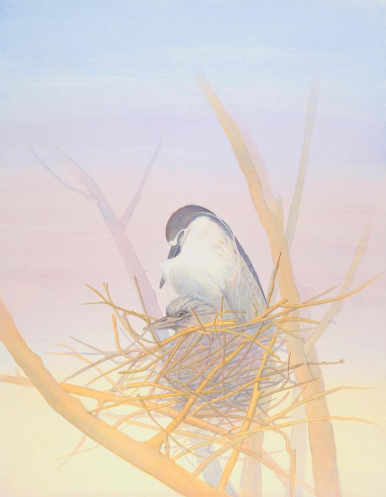 nesting_black_crowned_night_herons.jpg