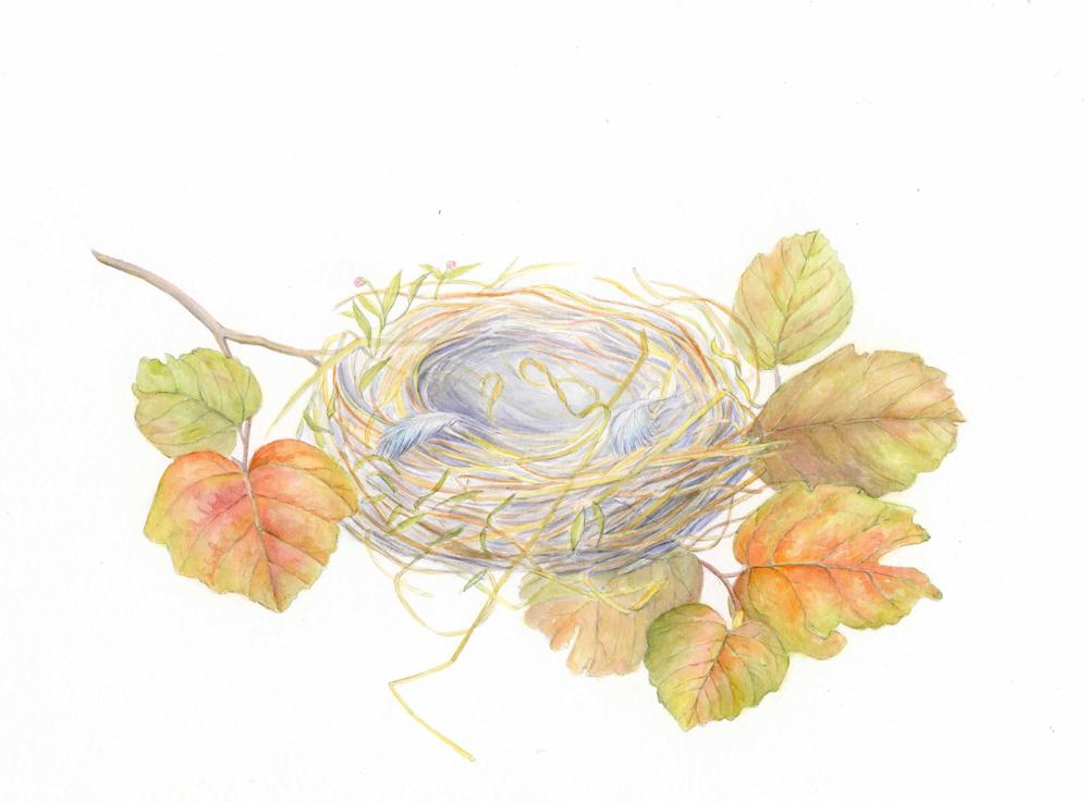 bird's nest.jpg