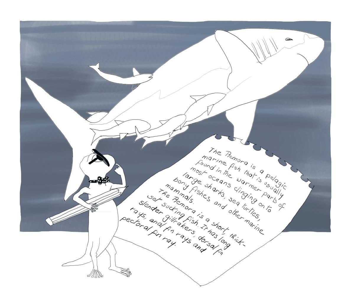 Basking Shark with Remoras, by Elizabeth B Martin