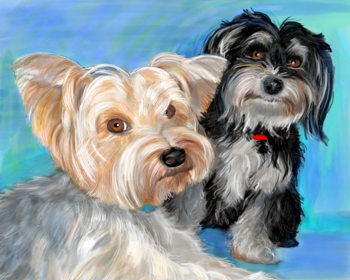 My yorkie Henry with his best friend Rocket the Havanese. Illustration by Elizabeth B Martin.