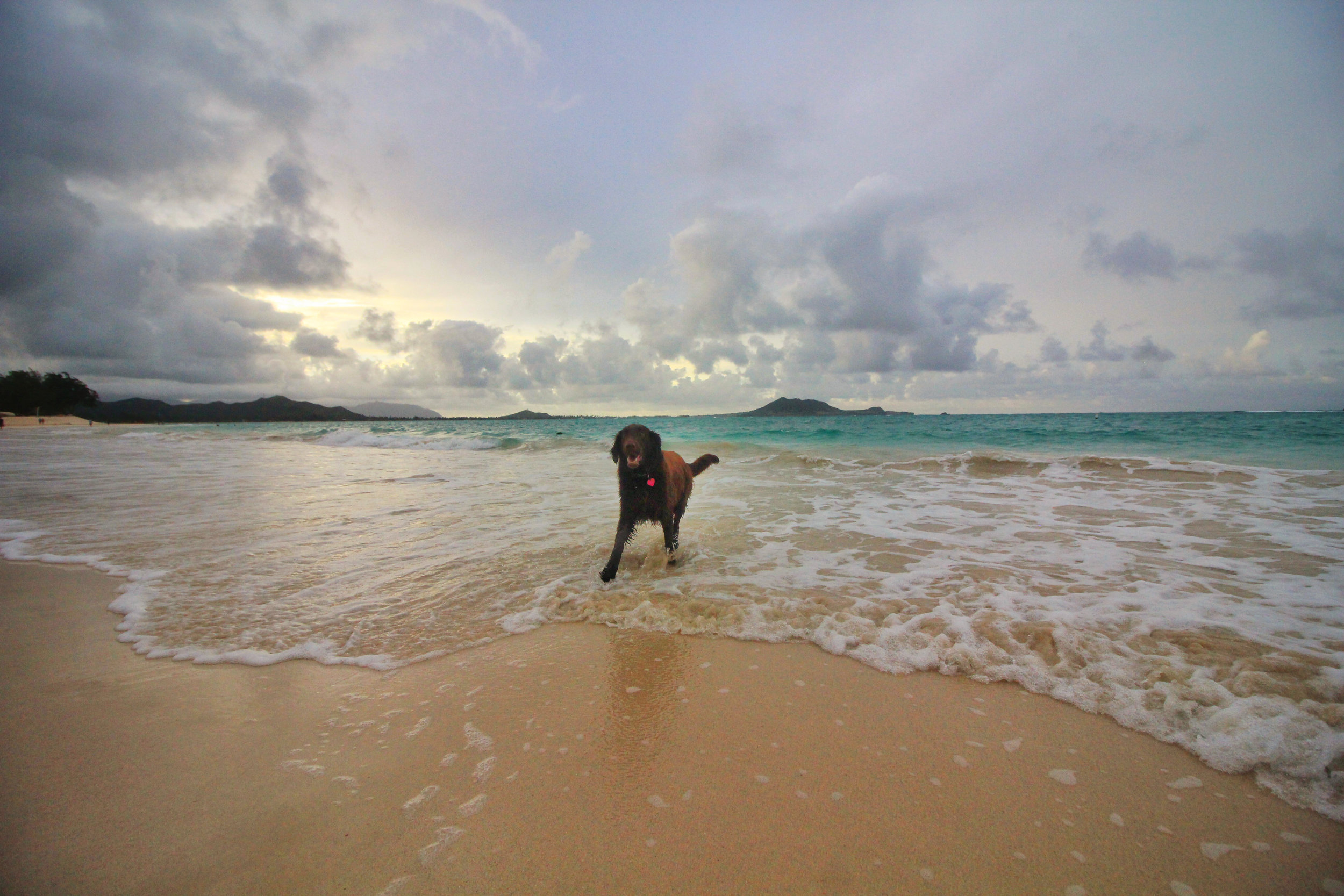 Dog got in my way of the sunset at Lanikai beach.
