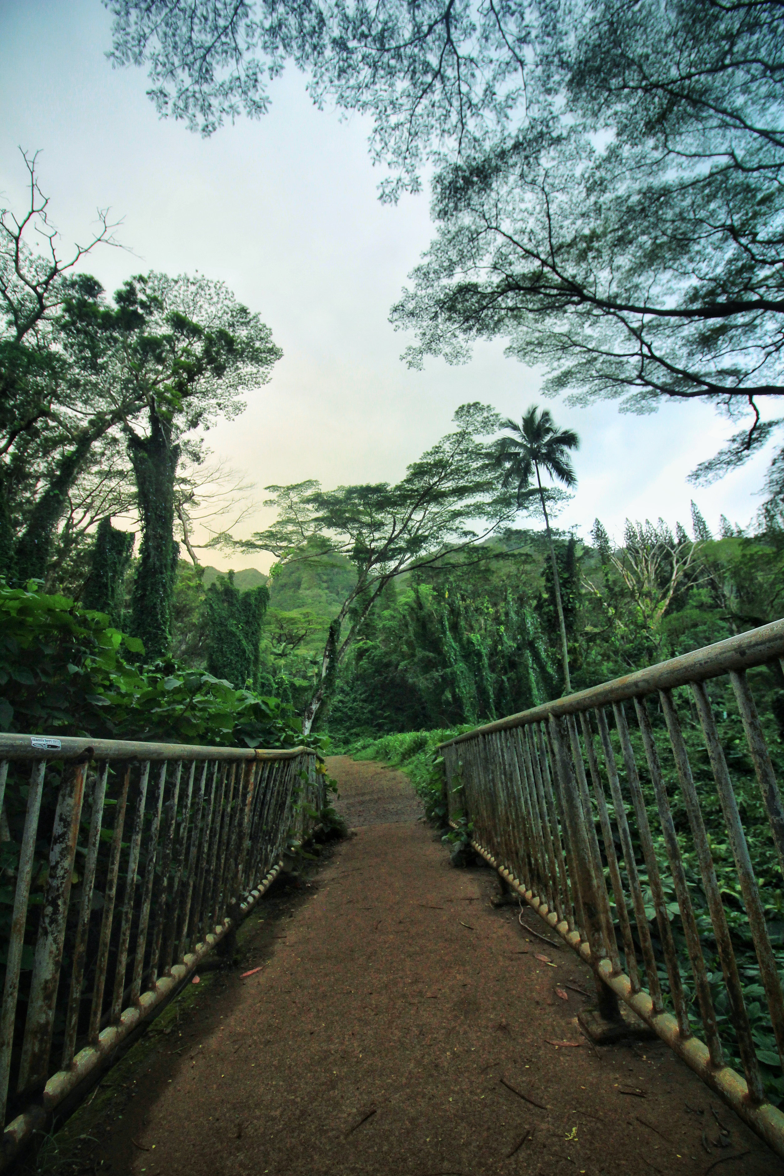 Start of the Trail to Manoa Falls