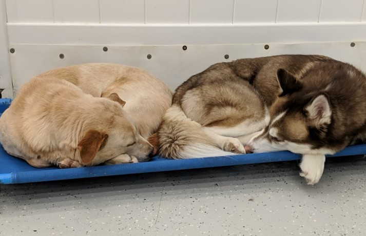 Sometimes everyone will take a short break at the same time together!