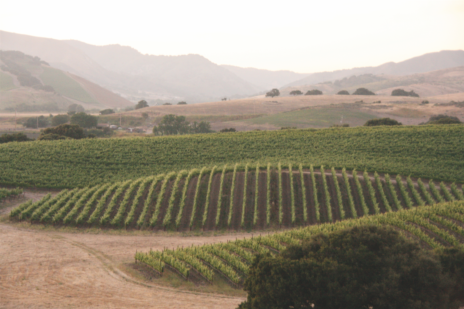 The expert contouring of Ampelos vineyards maximizes the potential terroir of the region.