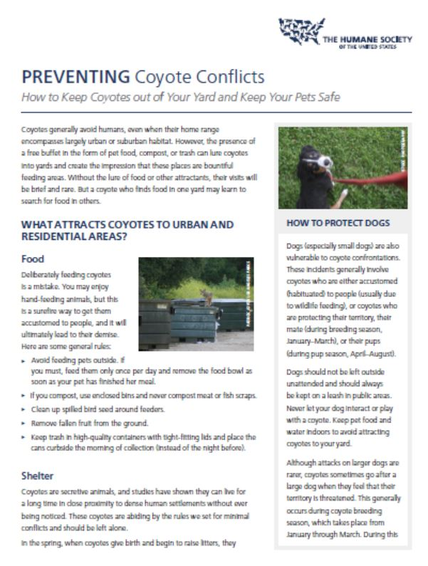 Preventing coyote conflicts.JPG