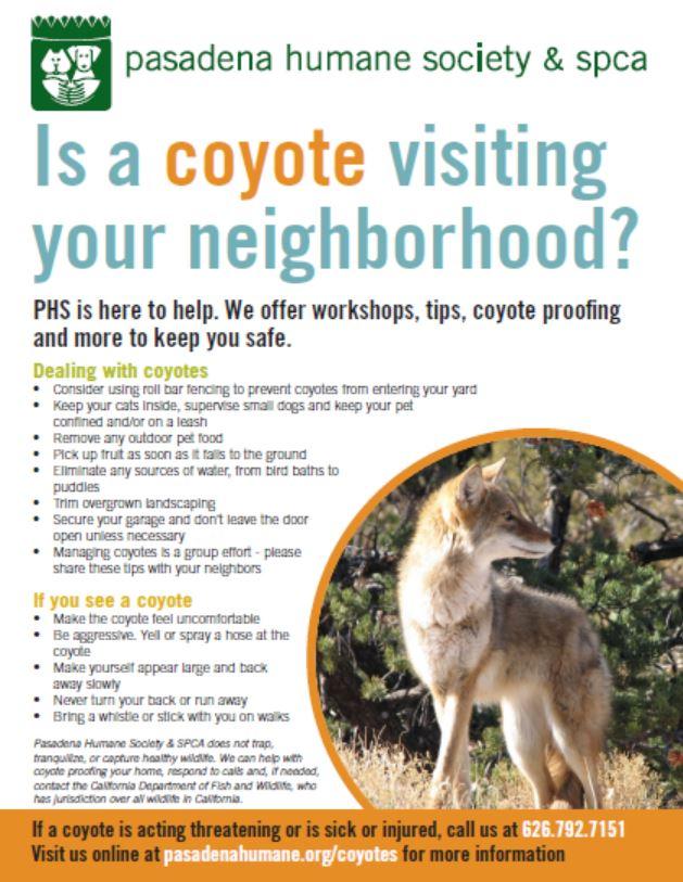 Pasadena Humane Society Coyote Flyer.JPG