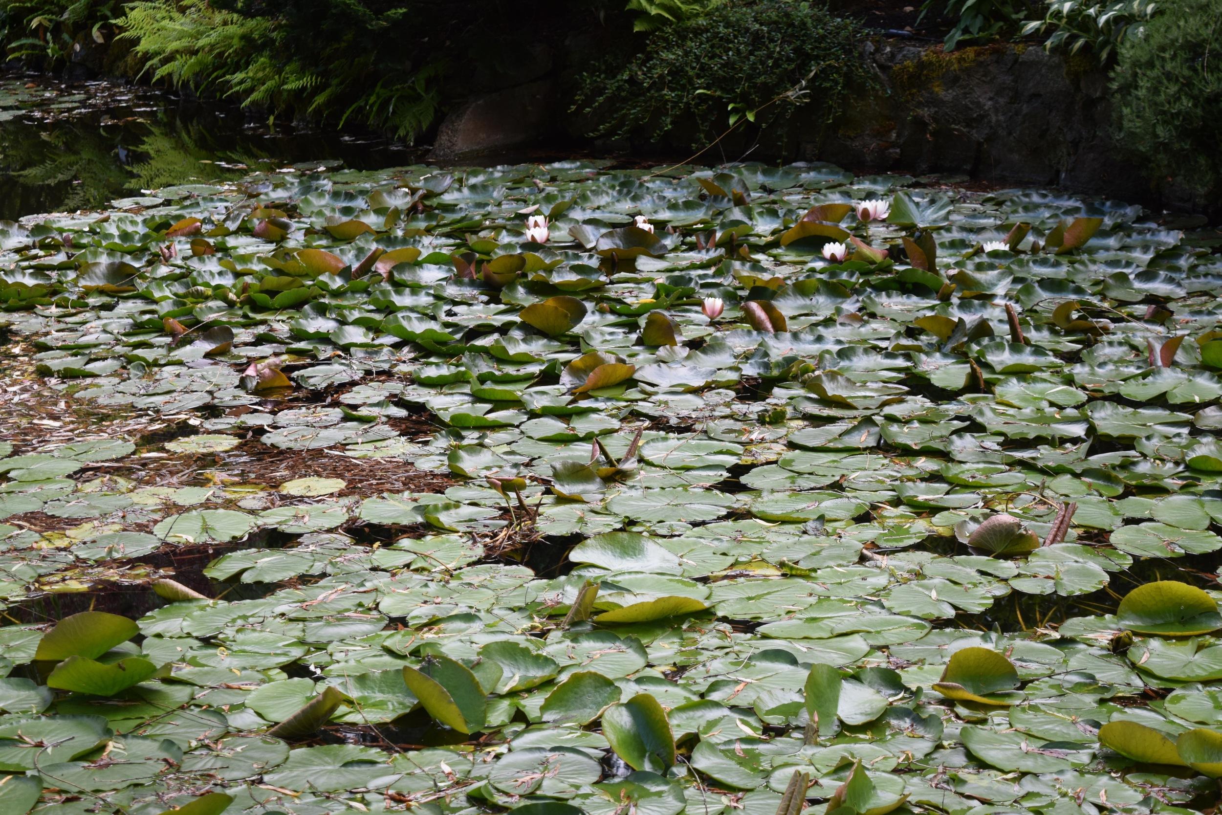 Buchart Gardens Japanese Garden.jpg