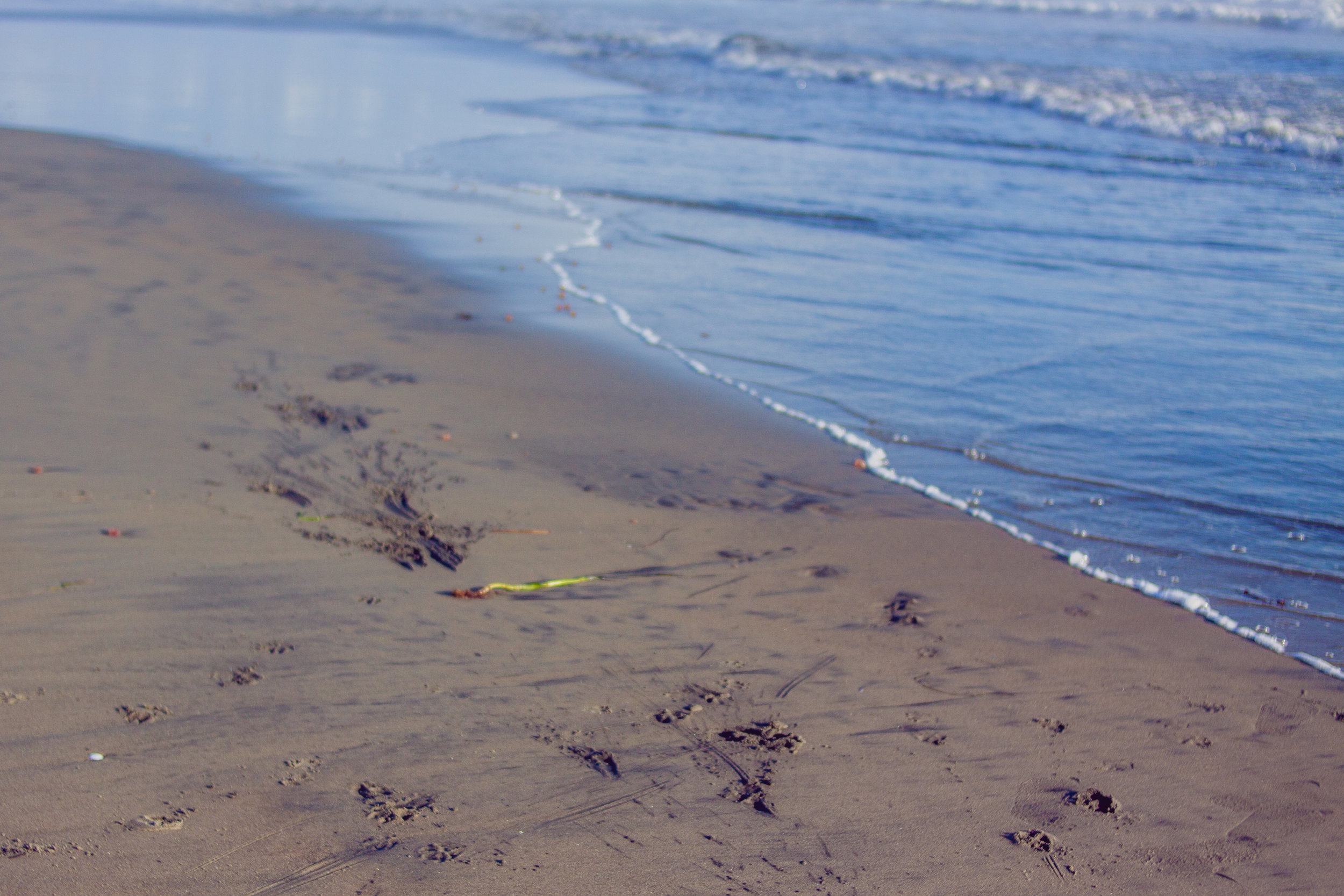 2017_02_BeachDay-129.jpg