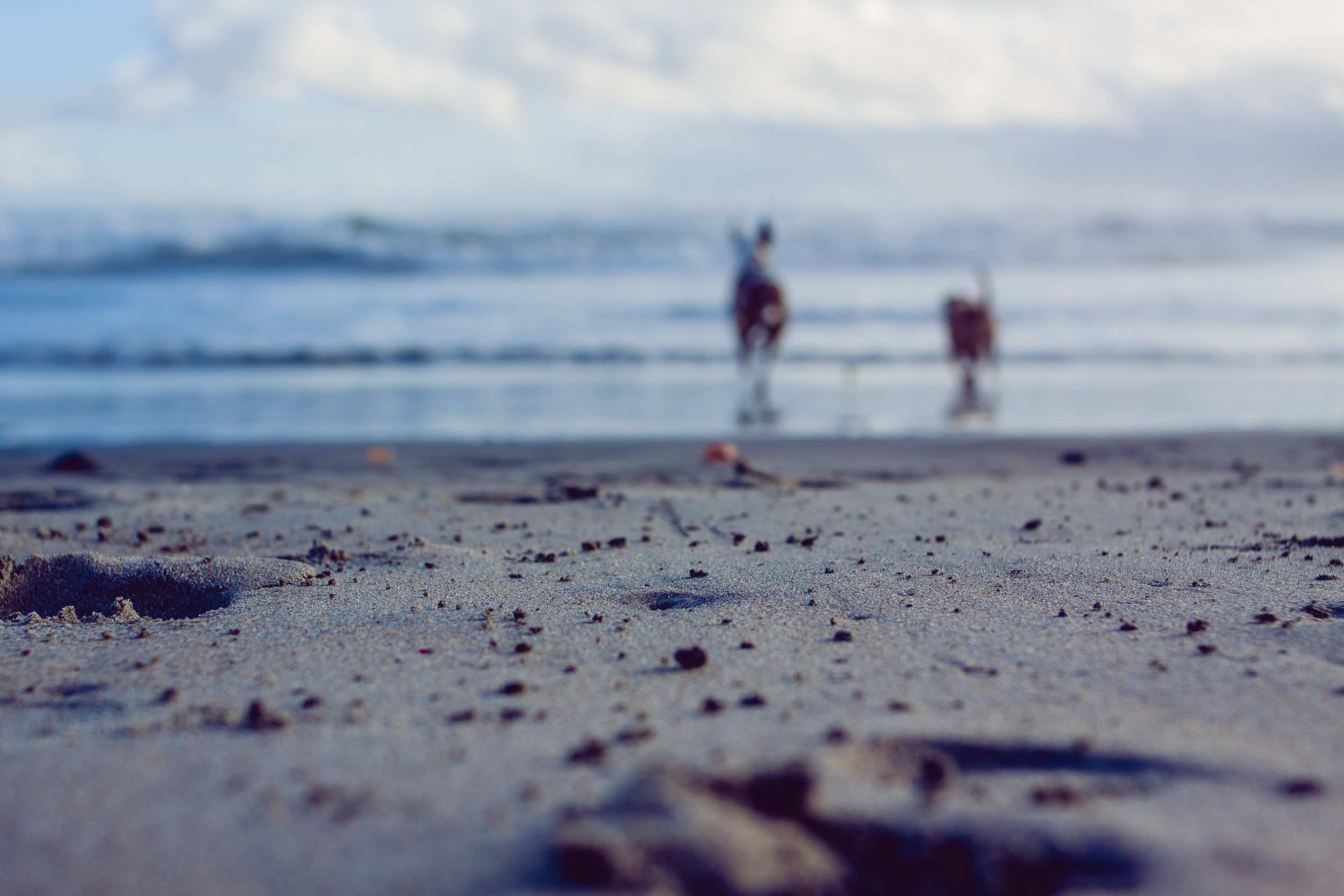 2017_02_BeachDay-135.jpg