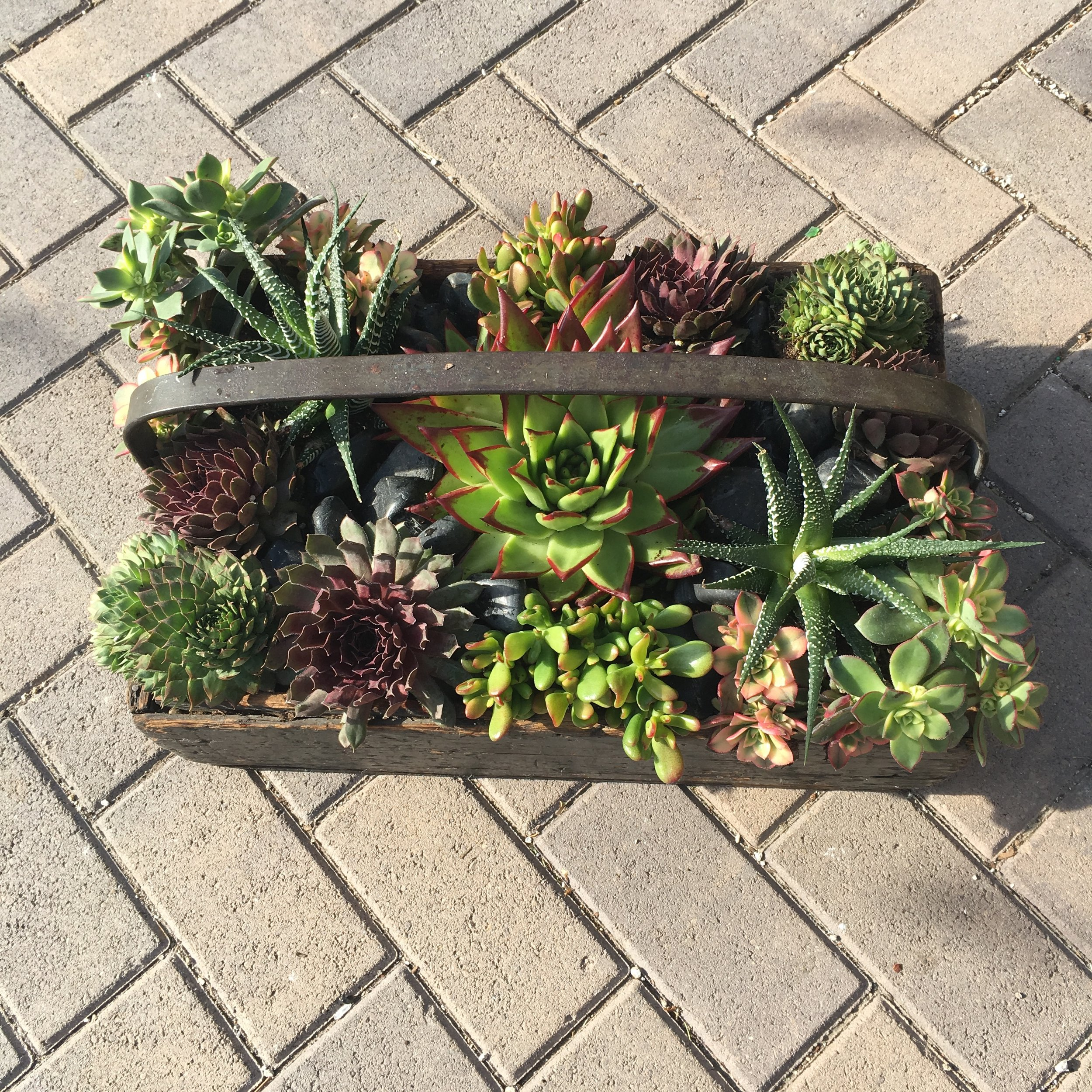 10. Antique Wooden Box Succulent Arrangement